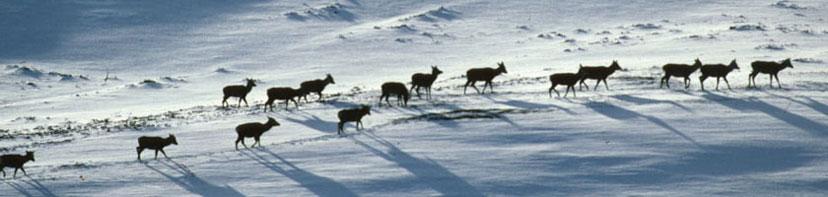 Deer Stalking at Ralia Estate